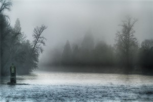 a fog shrouds the forest and a mist hovers over early morning waters
